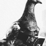 pigeon-camera-photographie-aerienne-10
